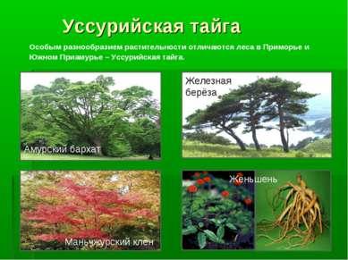 Уссурийская тайга Особым разнообразием растительности отличаются леса в Примо...