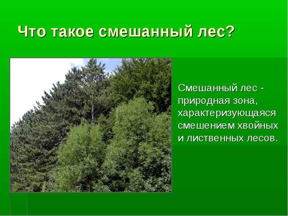 Что такое смешанный лес? Смешанный лес - природная зона, характеризующаяся см...