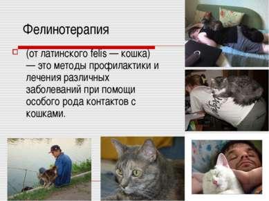 Фелинотерапия (от латинского felis — кошка) — это методы профилактики и лечен...