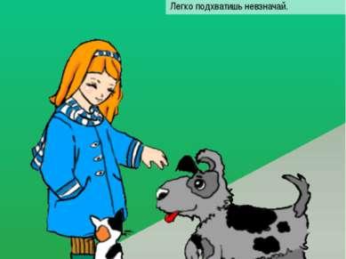 Не трогай бродячих кошек и собак Не трогай – ты себе не враг – Бродячих кошек...