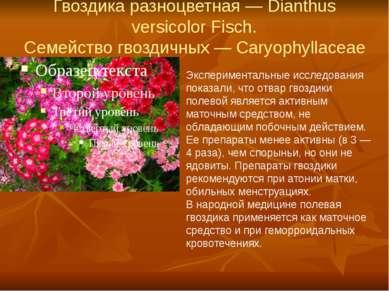 Гвоздика разноцветная — Dianthus versicolor Fisch. Семейство гвоздичных — Car...