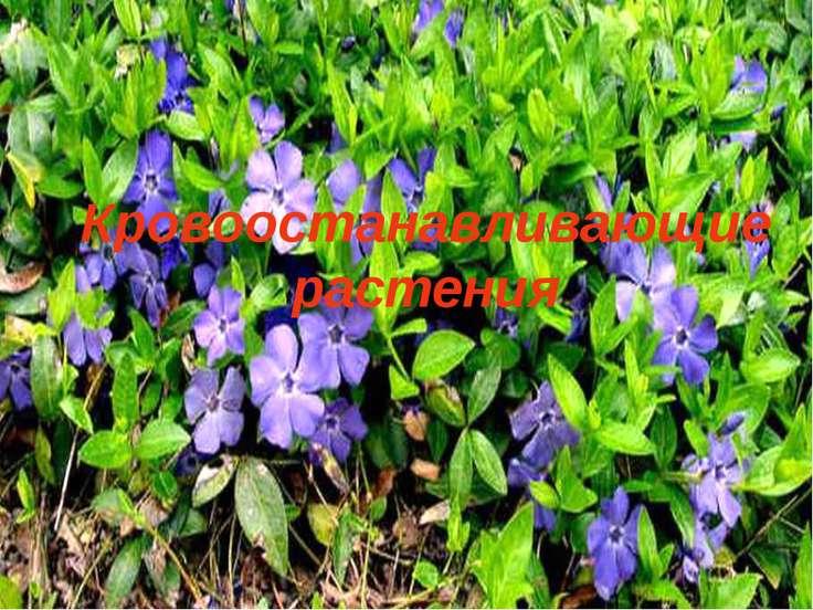 Кровоостанавливающие растения