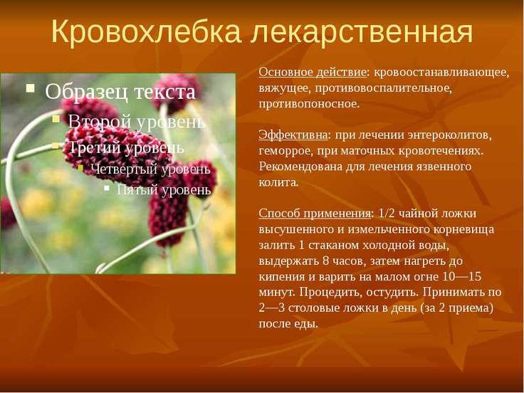 Кровохлебка лекарственная Основное действие: кровоостанавливающее, вяжущее, п...