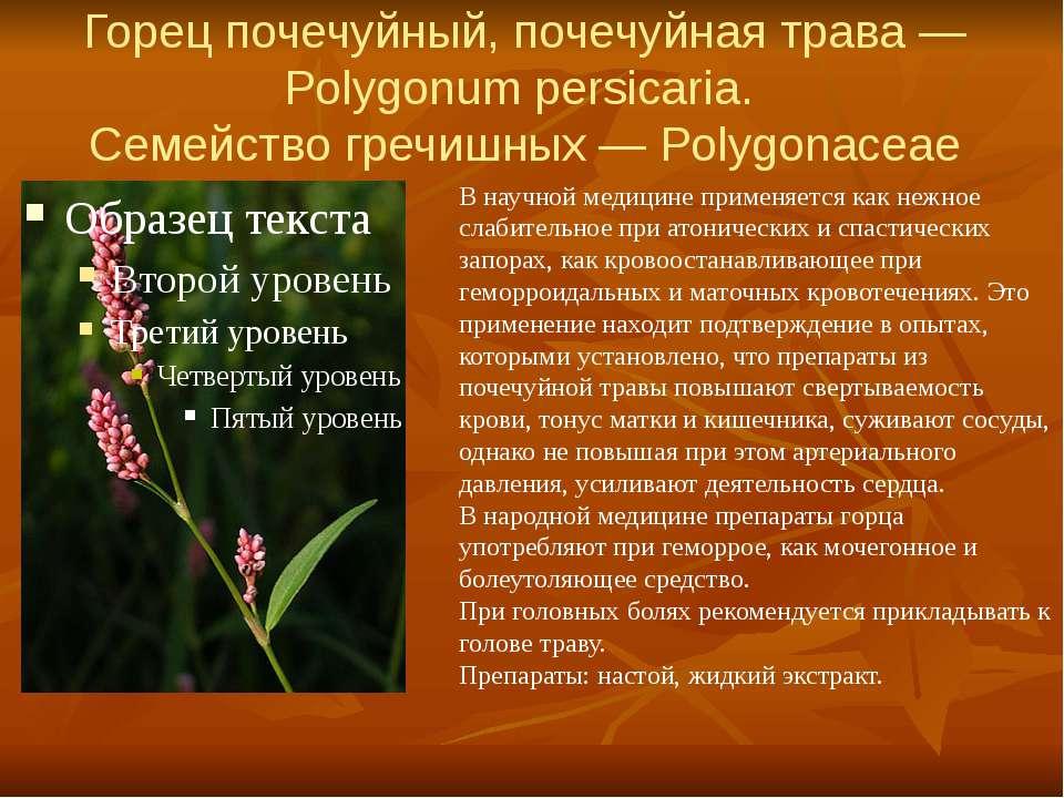 Горец почечуйный, почечуйная трава — Polygonum persicaria. Семейство гречишны...