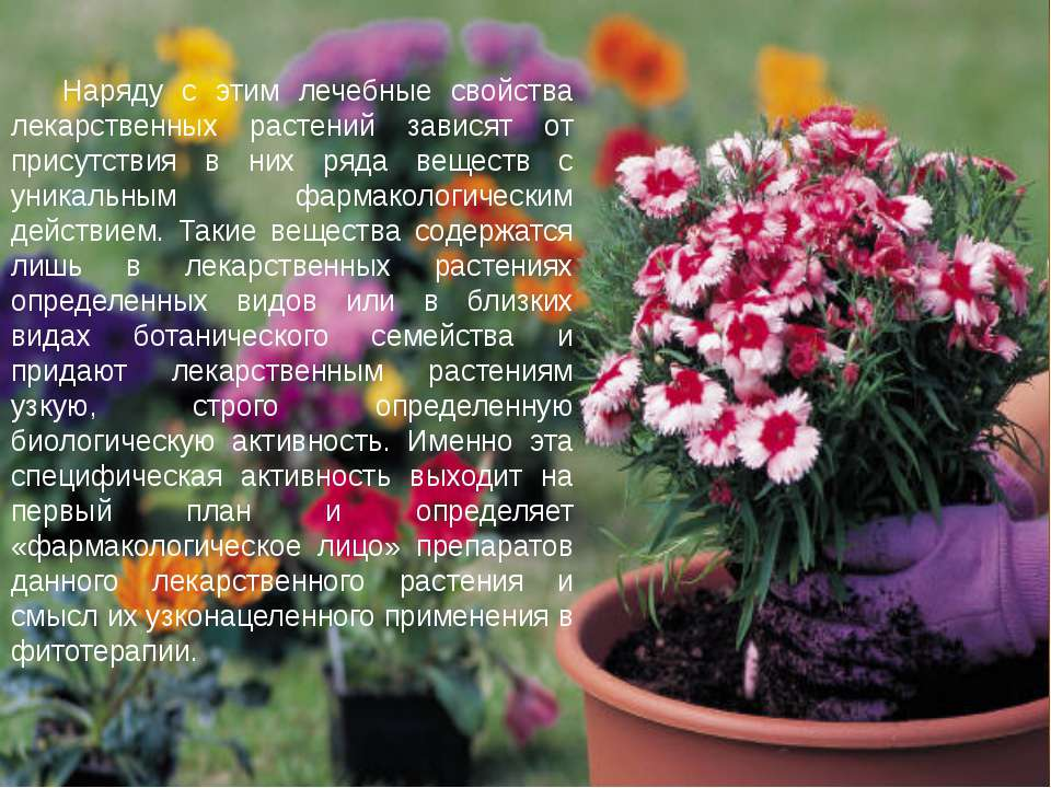 Наряду с этим лечебные свойства лекарственных растений зависят от присутствия...