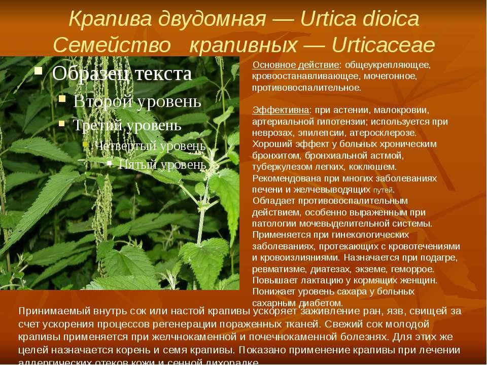 Крапива двудомная — Urtica dioica Семейство крапивных — Urticaceae Основное...