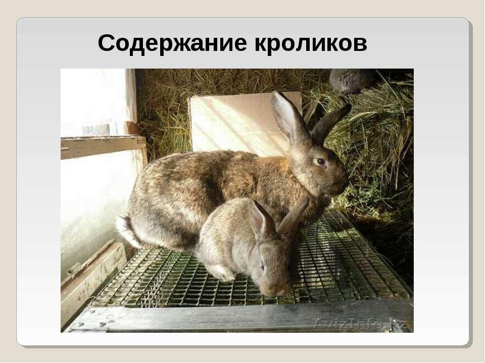 жилье Содержание кроликов