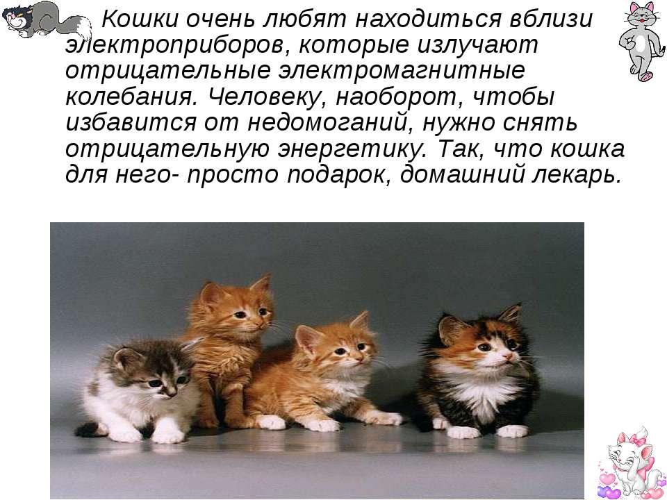 Кошки очень любят находиться вблизи электроприборов, которые излучают отрицат...