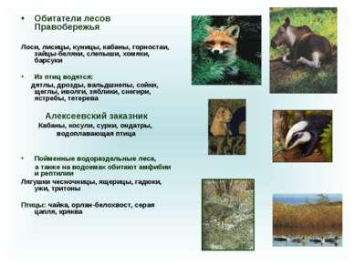 Обитатели лесов Правобережья Лоси, лисицы, куницы, кабаны, горностаи, зайцы-б...