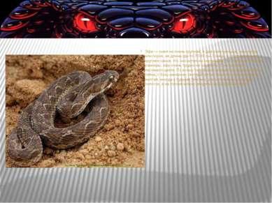 Эфа— змея неочень крупная, вдва раза меньше, чем кобра или гюрза, еедлина...