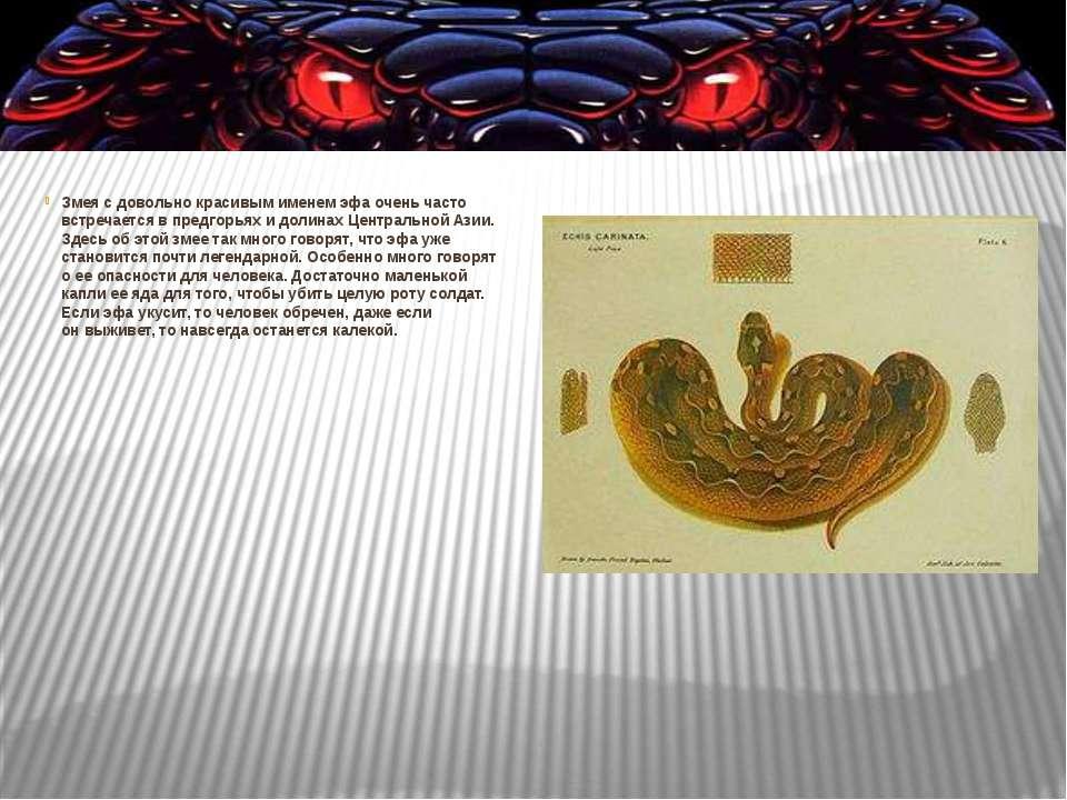 Змея сдовольно красивым именем эфа очень часто встречается впредгорьях идо...