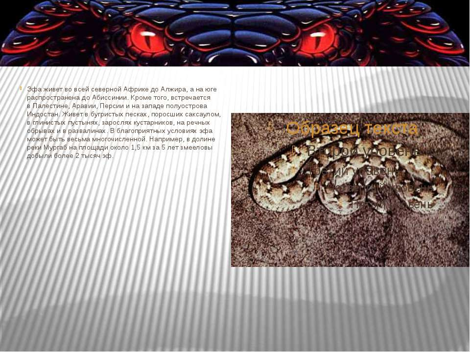 Эфа живет вовсей северной Африке доАлжира, анаюге распространена доАбисс...