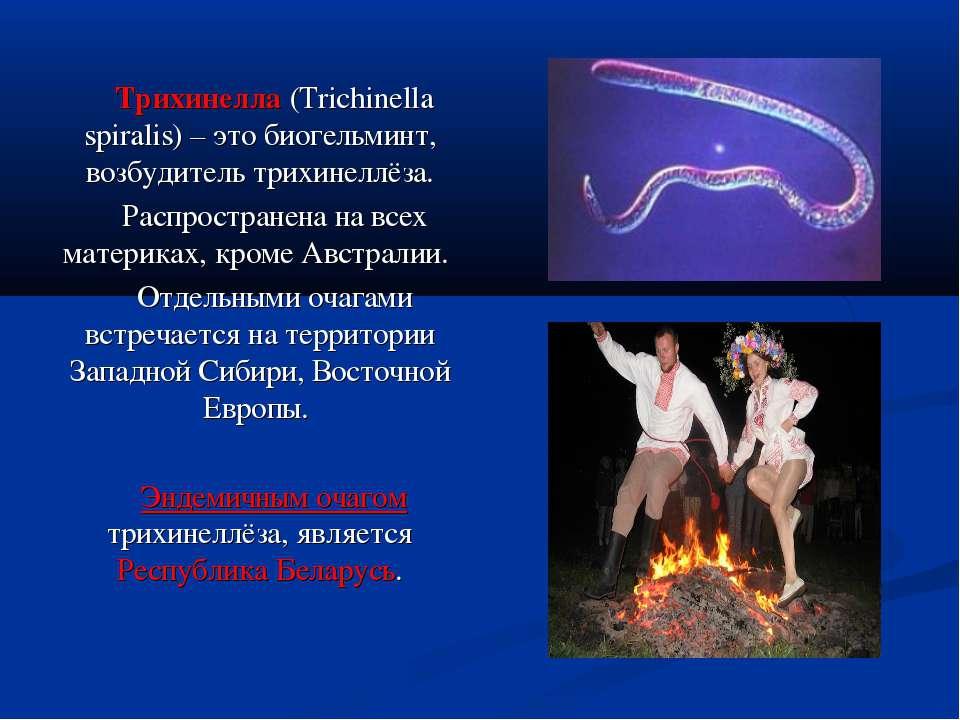 Трихинелла (Trichinella spiralis) – это биогельминт, возбудитель трихинеллёза...