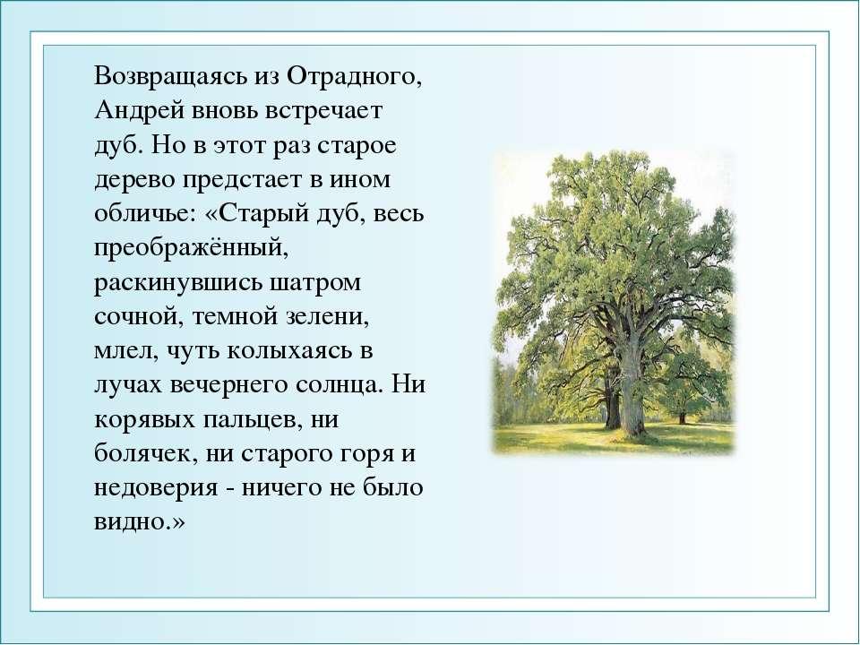 Возвращаясь из Отрадного, Андрей вновь встречает дуб. Но в этот раз старое де...