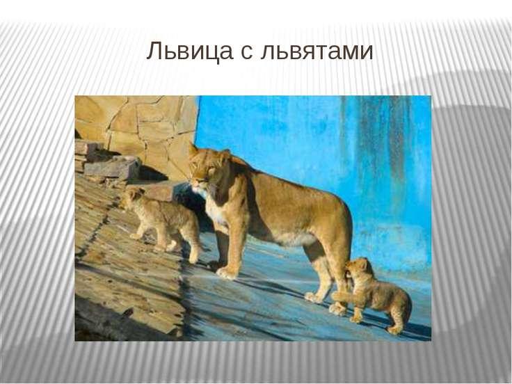 Львица с львятами