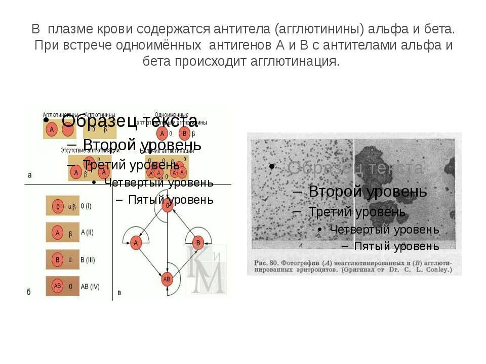 В плазме крови содержатся антитела (агглютинины) альфа и бета. При встрече од...