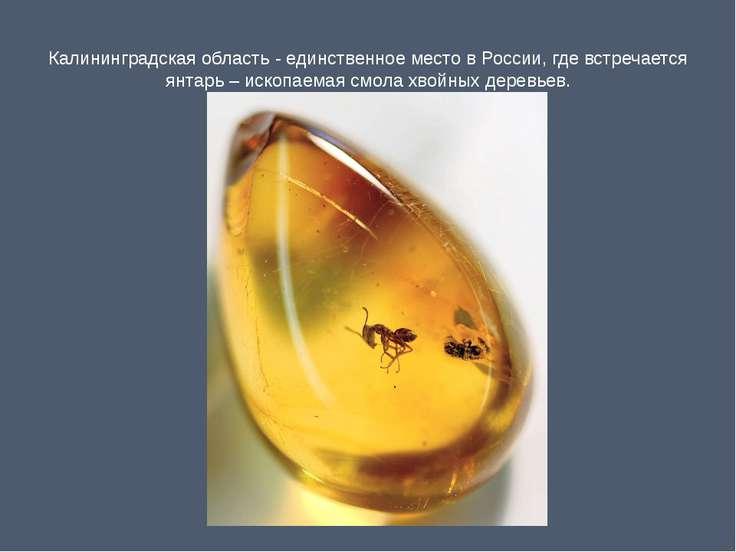 Калининградская область - единственное место в России, где встречается янтарь...