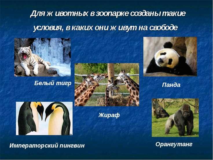 Для животных в зоопарке созданы такие условия, в каких они живут на свободе Б...