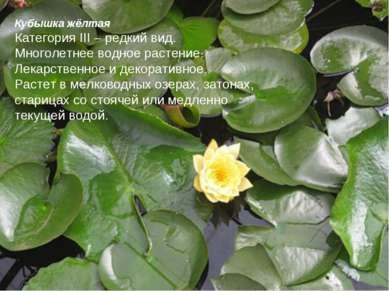 Кубышка жёлтая Категория III – редкий вид. Многолетнее водное растение. Лекар...