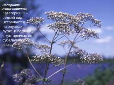 Валериана лекарственная Категория III – редкий вид. Встречается на опушках, л...