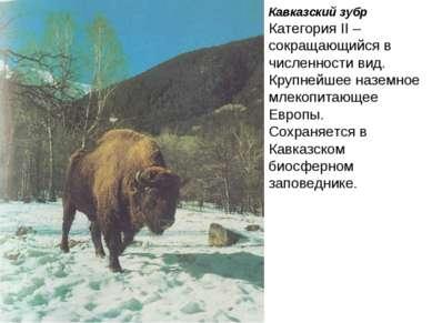 Кавказский зубр Категория II – сокращающийся в численности вид. Крупнейшее на...