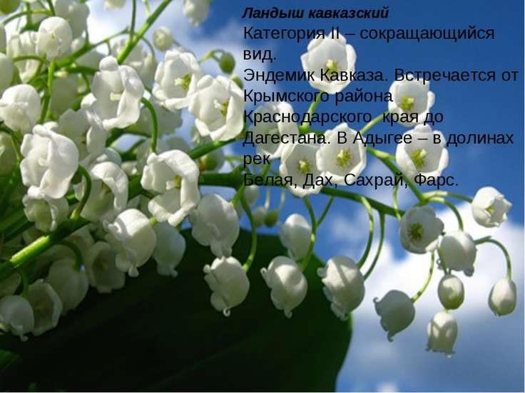 Ландыш кавказский Категория II – сокращающийся вид. Эндемик Кавказа. Встречае...