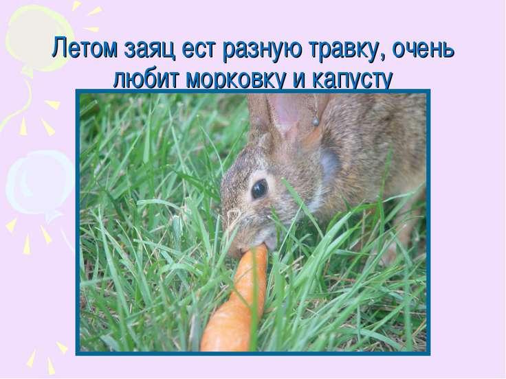 Летом заяц ест разную травку, очень любит морковку и капусту