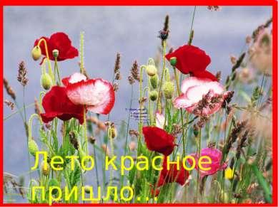 Лето красное пришло…