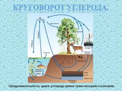 Продолжительность цикла углерода равна трем-четырем столетиям.