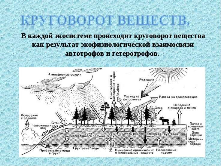 В каждой экосистеме происходит круговорот вещества как результат экофизиологи...
