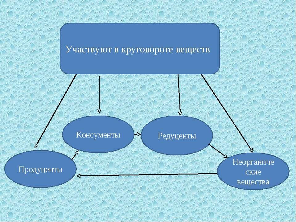 Участвуют в круговороте веществ Продуценты Консументы Редуценты Неорганически...
