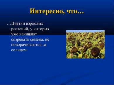 Интересно, что… …Цветки взрослых растений, у которых уже начинают созревать с...
