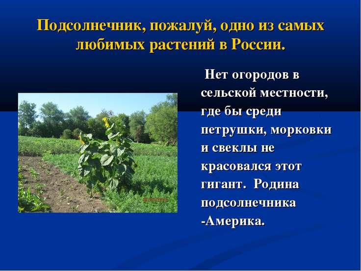 Подсолнечник, пожалуй, одно из самых любимых растений в России. Нет огородов ...