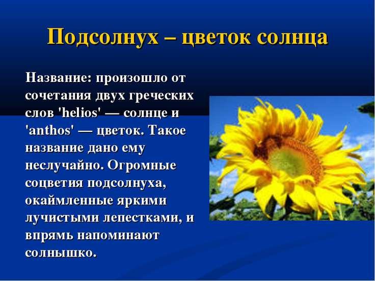 Подсолнух – цветок солнца Название: произошло от сочетания двух греческих сло...