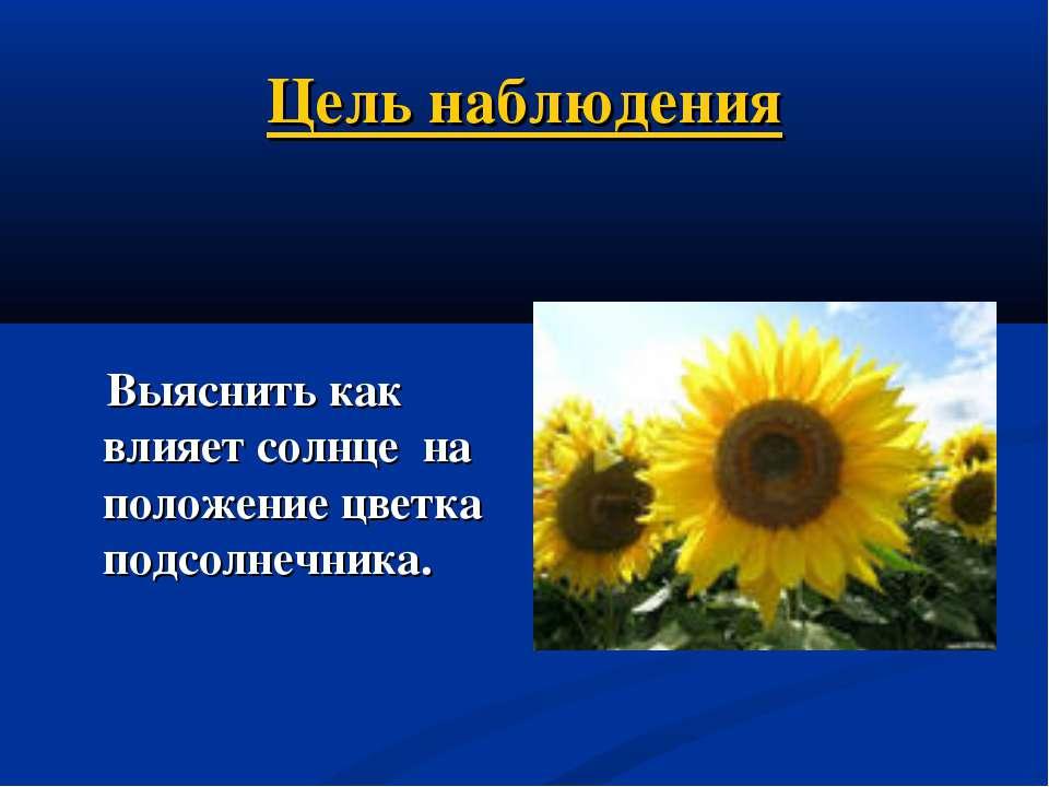 Цель наблюдения Выяснить как влияет солнце на положение цветка подсолнечника.