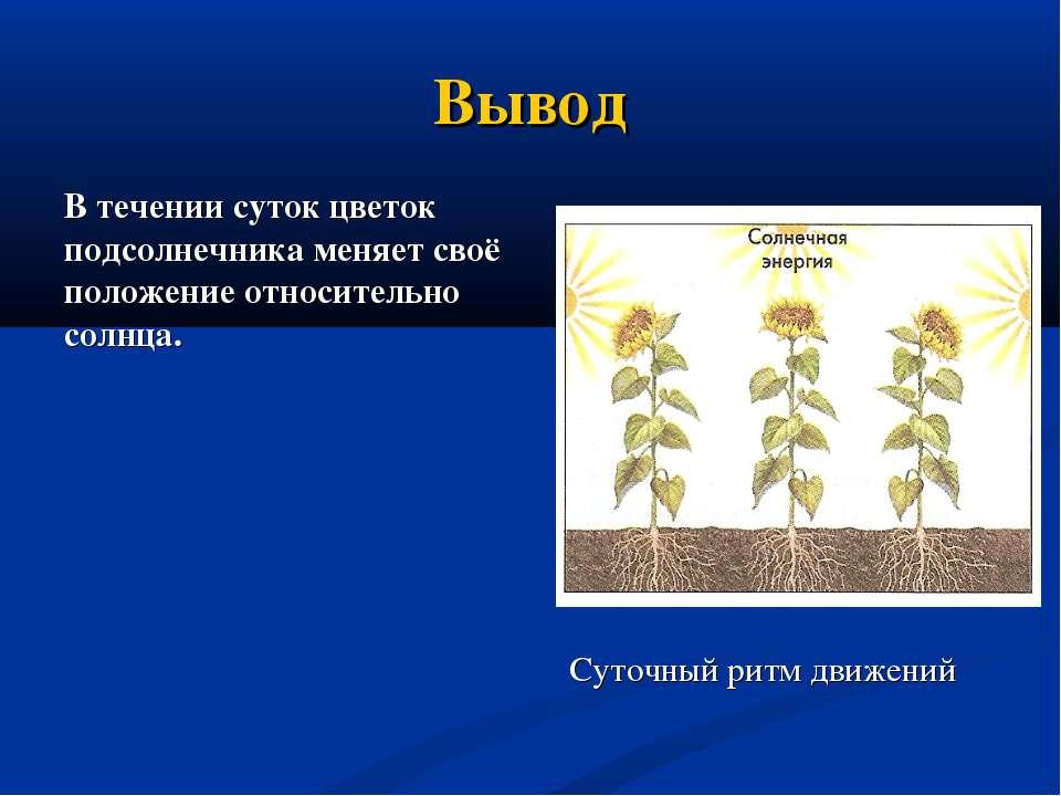Вывод В течении суток цветок подсолнечника меняет своё положение относительно...