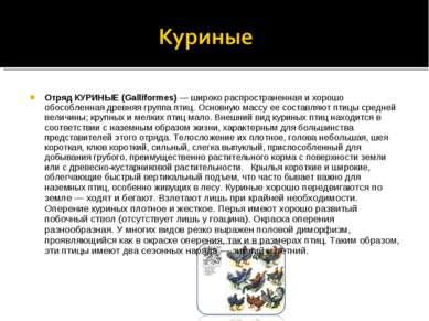 Отряд КУРИНЫЕ (Galliformes) — широко распространенная и хорошо обособленная д...