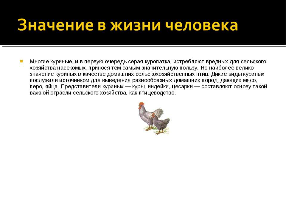 Многие куриные, и в первую очередь серая куропатка, истребляют вредных для се...