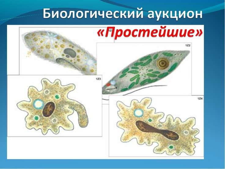 Кариес презентация питание одноклеточные организмы презентация византии