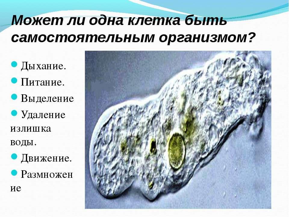 Может ли одна клетка быть самостоятельным организмом? Дыхание. Питание. Выдел...