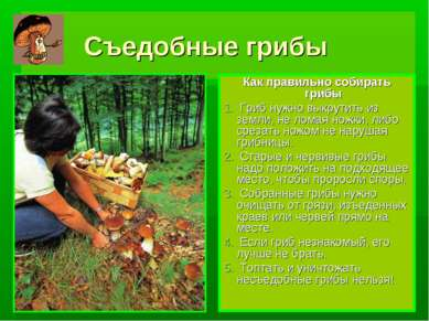 Съедобные грибы Как правильно собирать грибы Гриб нужно выкрутить из земли, н...
