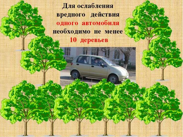 Для ослабления вредного действия одного автомобиля необходимо не менее 10 дер...
