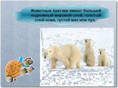 Животные Арктики имеют большой подкожный жировой слой, толстый слой кожи, гус...