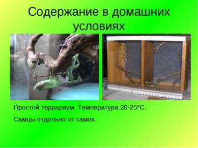 Простой террариум. Температура 20-25 С. Самцы отдельно от самок. Содержание в...