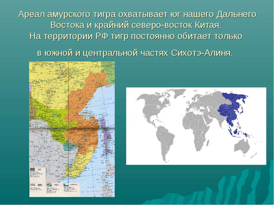 Ареал амурского тигра охватывает юг нашего Дальнего Востока и крайний северо-...