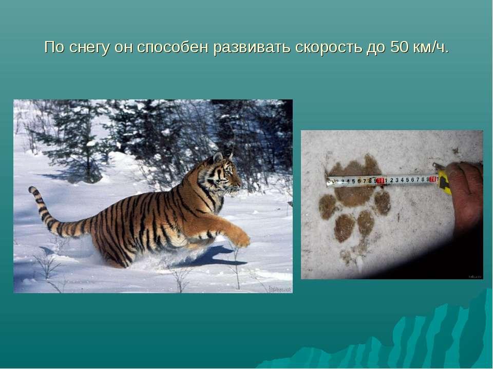 По снегу он способен развивать скорость до 50 км/ч.