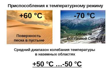 Приспособления к температурному режиму +60 °С -70 °С Поверхность песка в пуст...