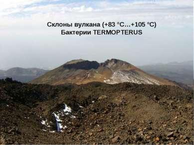Склоны вулкана (+83 °С…+105 °С) Бактерии TERMOPTERUS