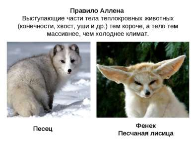 Правило Аллена Выступающие части тела теплокровных животных (конечности, хвос...