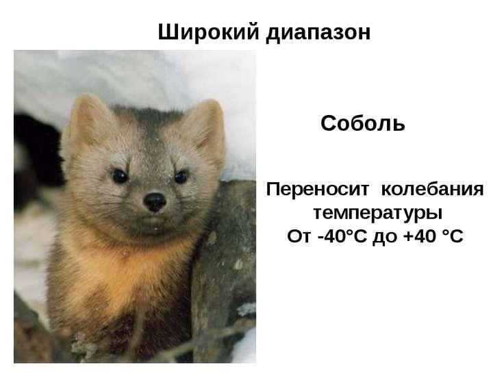 Широкий диапазон Соболь Переносит колебания температуры От -40°С до +40 °С